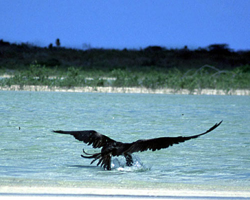 Bird Watching in Punta Allen Mayan Riviera Mexico