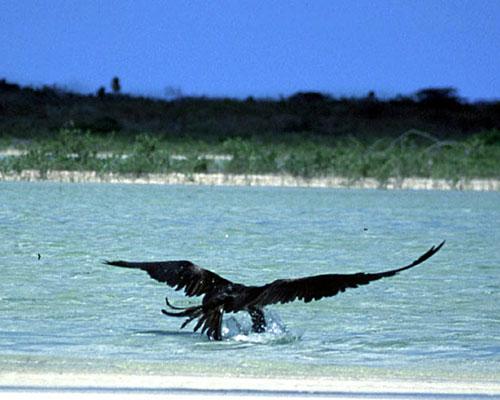 Bird Watching in Punta Allen Mayan Riviera Mexico