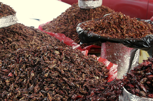 Chapulines in the marketplace(photo by Matt Murf courtesy of Flickr)
