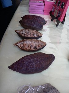 Dried Cocoa