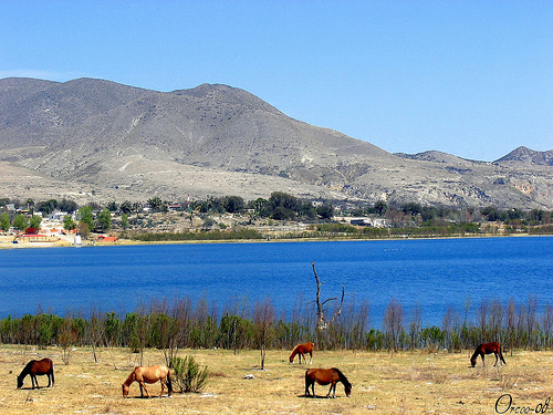Horses on the Shore of Laguna de Labradores Lake