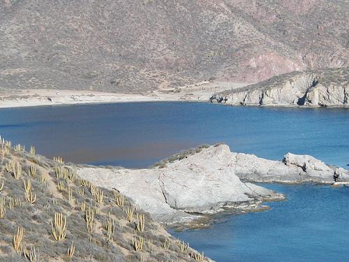 Cactus Meets Blue Ocean in Sunny San Carlos