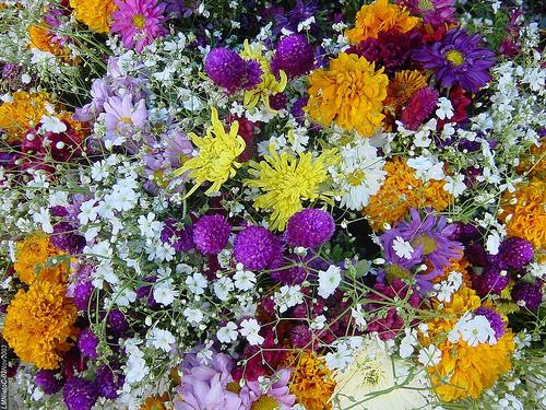 Flowers for Sale at Guanajuato's Hidalgo Market