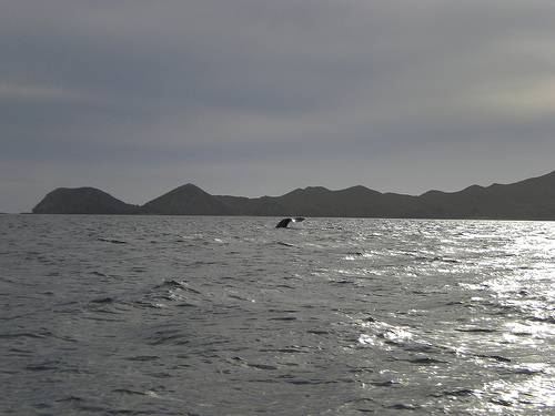 Whale Watching in Sunny San Carlos