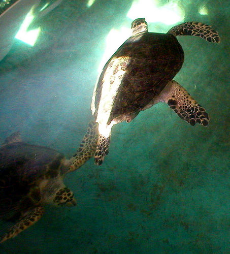 The National Mexican Turtle Center: A Sanctuary for Sea Turtles and Visitors