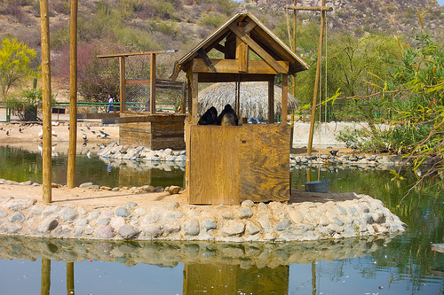 Monkey House at the Ecological Center of Sonora in Hermosillo